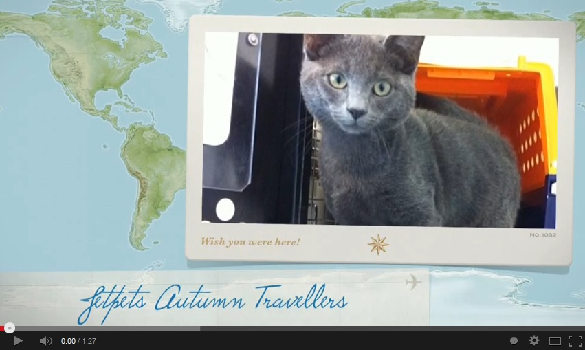 We had some fantastic furry (and feathery) friends travel with us this autumn! Jetpets Pet Travel