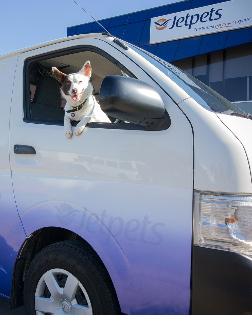 Are Your Pets Travelling With Us From Australia To New Zealand?