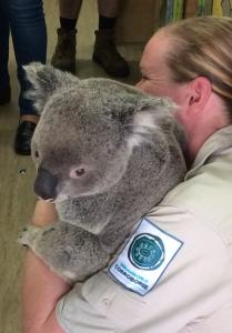 Koala shot 2