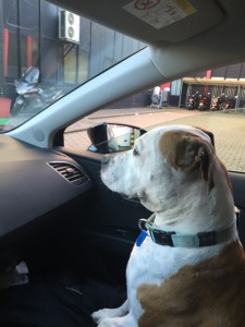 Travelling (By Car or Plane) With Your Pet