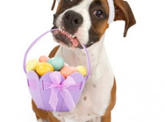 column_002_Easter-dog