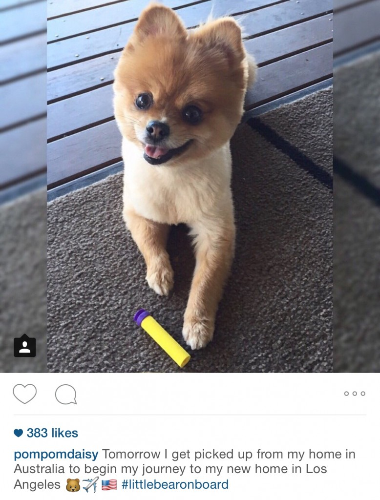 Here at Jetpets, we love checking out famous furry friends on social media.