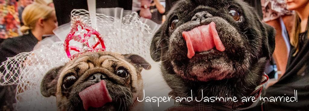 A Pug Wedding - Celebrity Pets