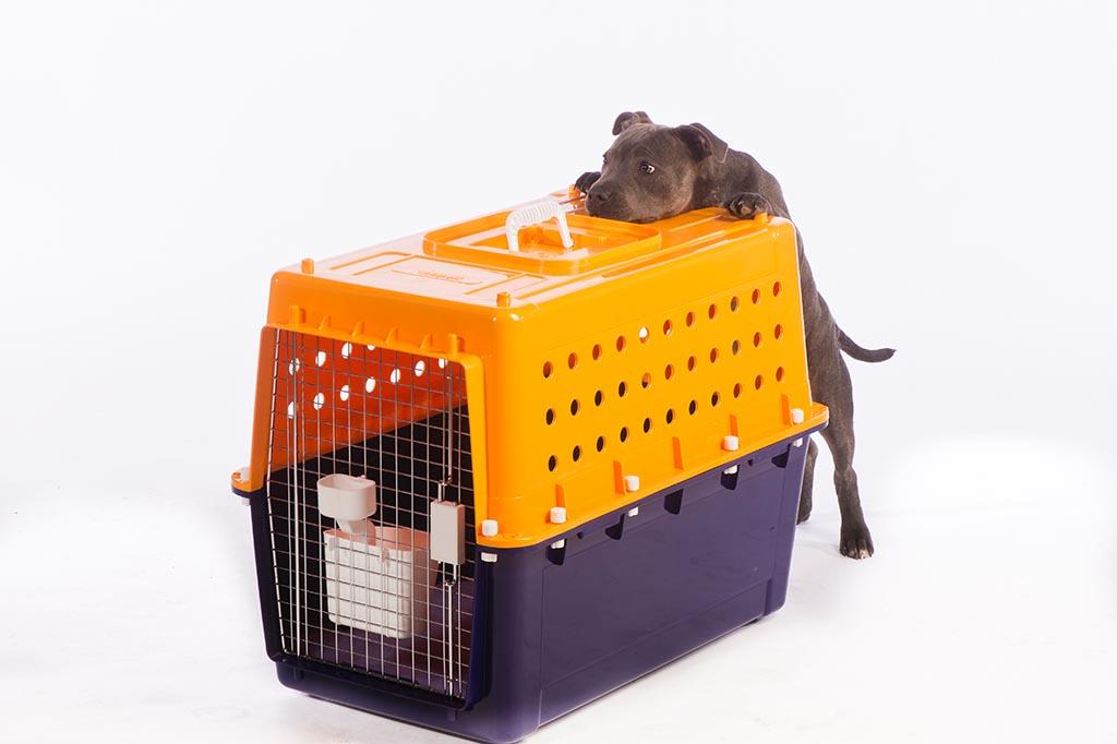 Australia Pet Travel Requirements