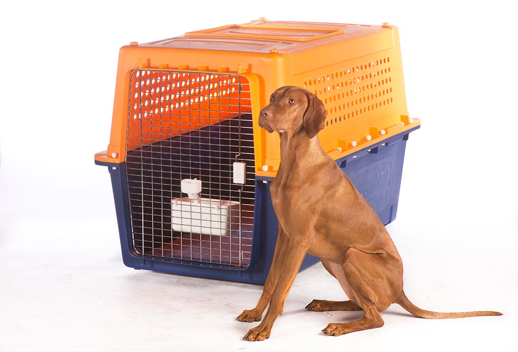 Book Crate Hire Today Jetpets Animal Transport