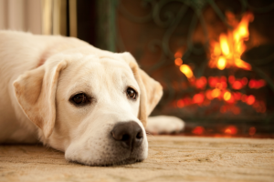 Winter Blues - how to look after your dog or cat in winter