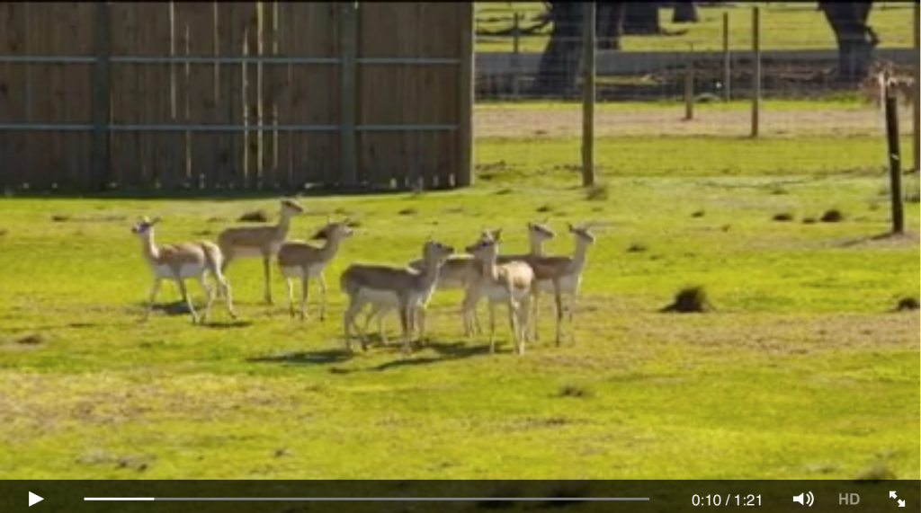 Antelopes Off To New Zealand - Zoo moves by Jetpets