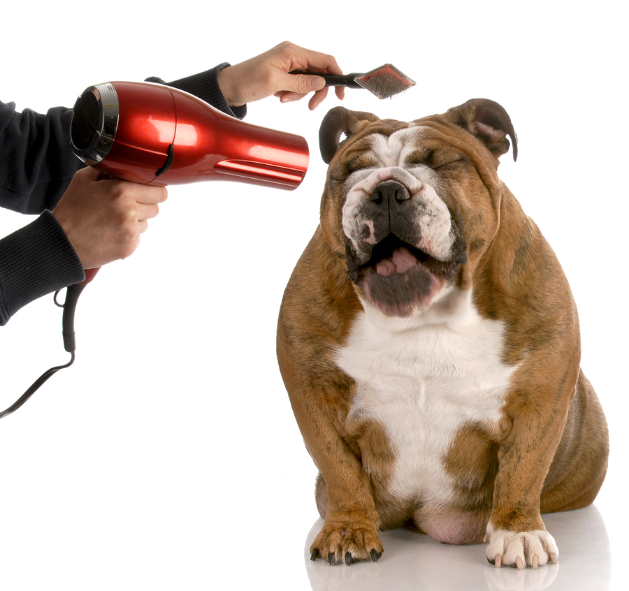 Dog Grooming - New Year's Resolutions for your pets