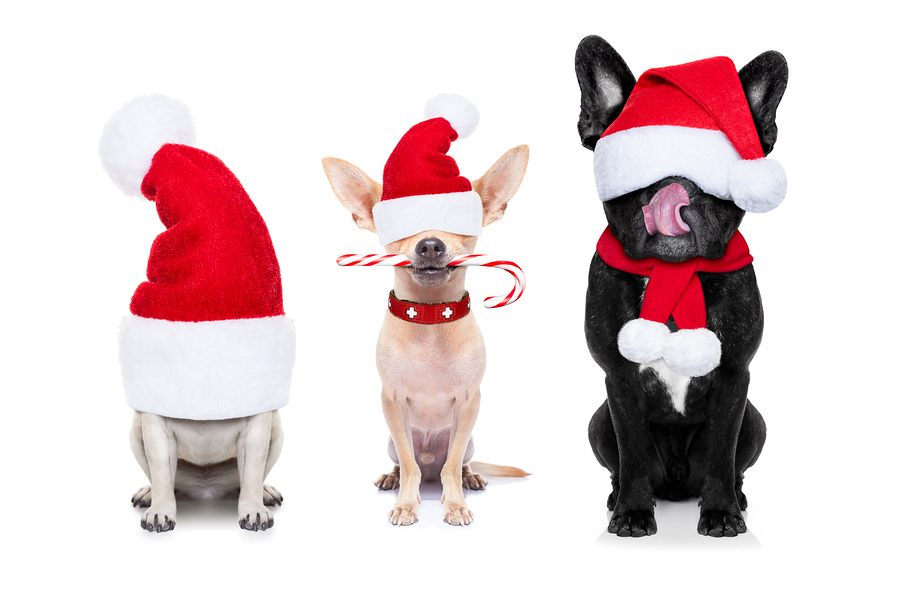Fun Ways To Include Your Pets In Christmas Celebrations - Jetpets