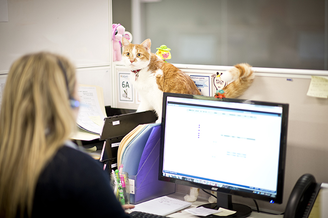 Pets in the Workplace | Pets at Work | Jetpets | Travel | All Care Pet Transport