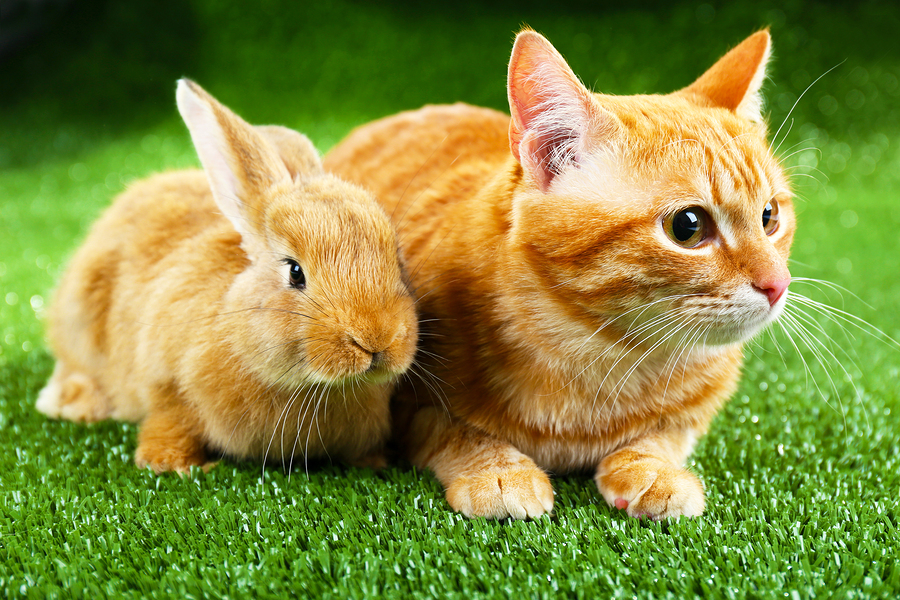 Easter Safety For Your Pet | Easter Pets | Safety | Helpful Hints | Jetpets