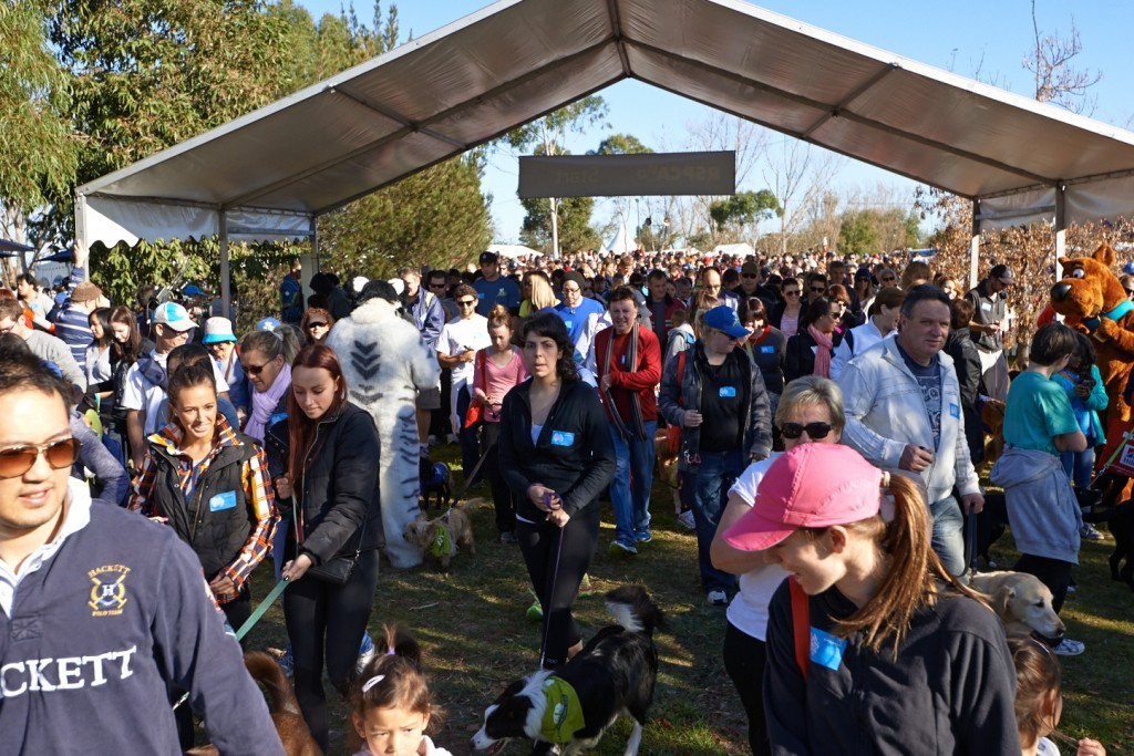 RSPCA Million Paws Walk 2016 | Million Paws | Jetpets | News | International Pet Carrier