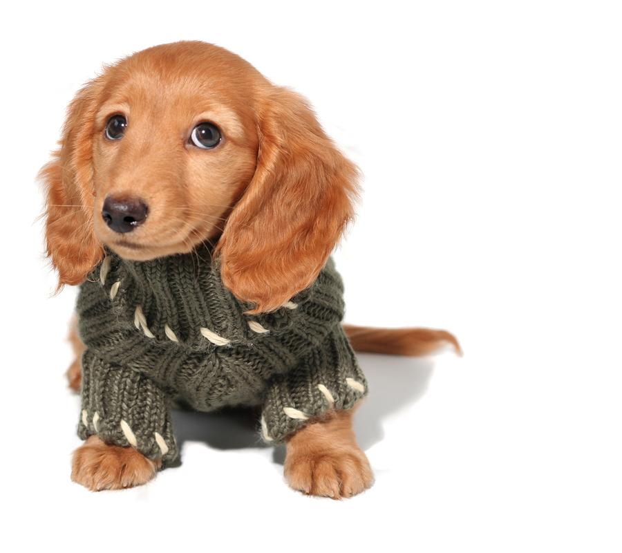 Autumn And Your Pet | Autumn | Pet Tips | Pet Dressing | Jetpets
