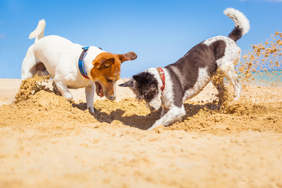 Dogs Digging A Hole - How to keep your pets healthy and happy over the warmer months