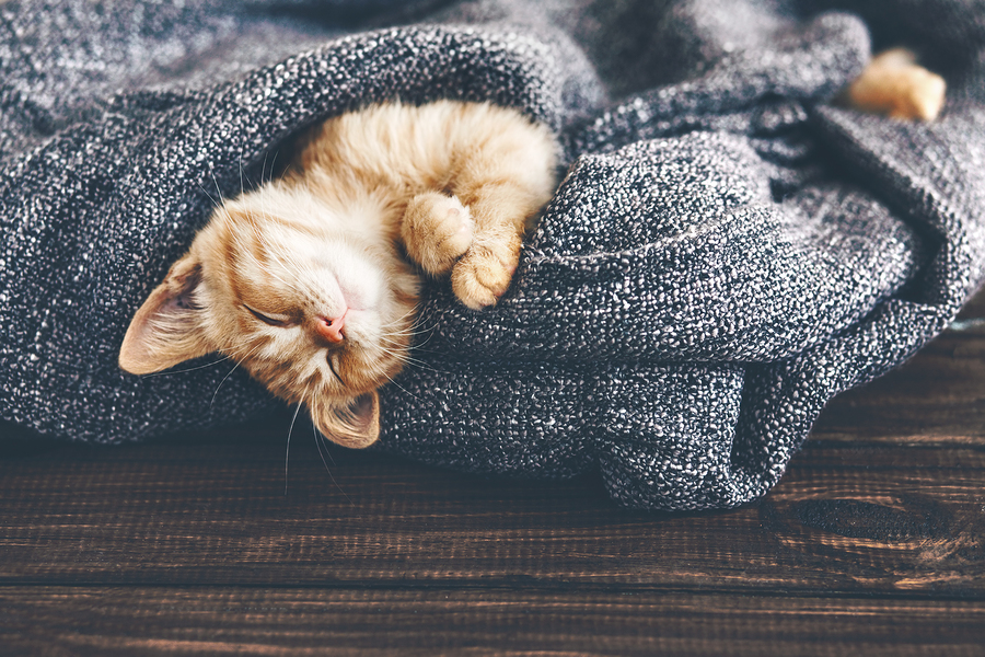 Cute little ginger kitten is sleeping in soft blanket on wooden