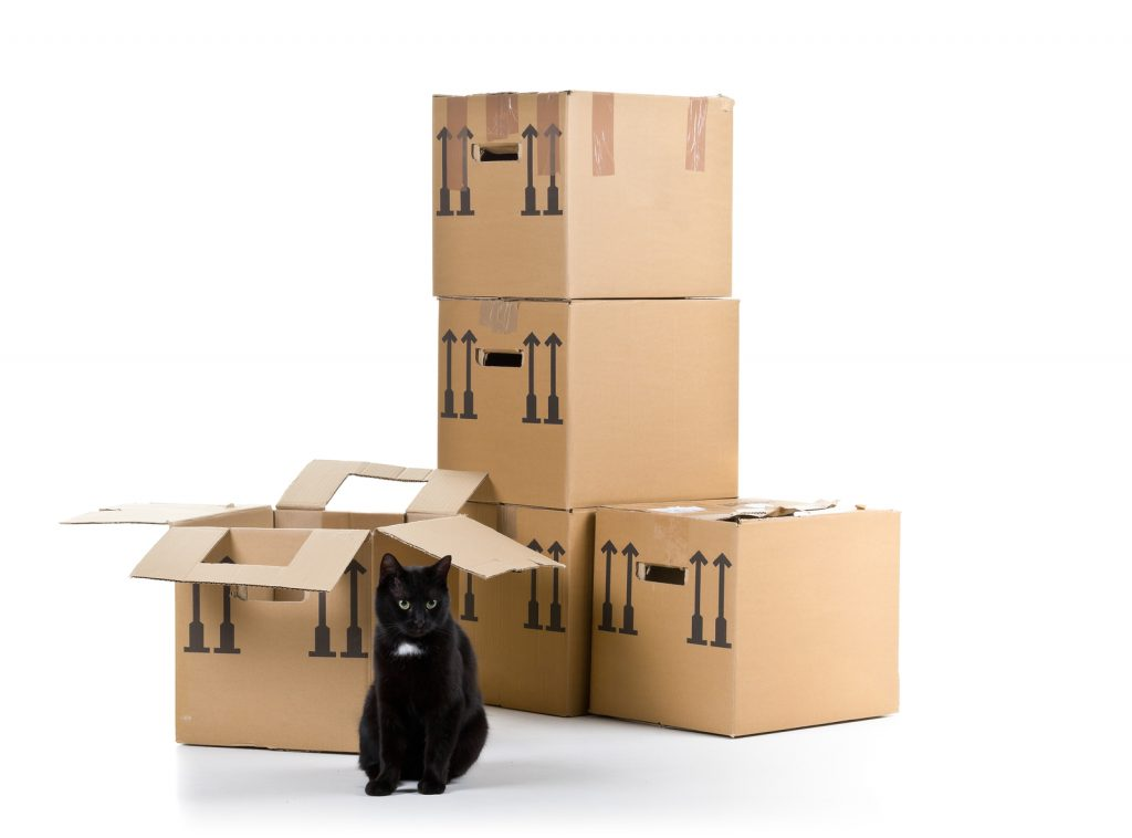 Black cat with stacked moving carton boxes over white background