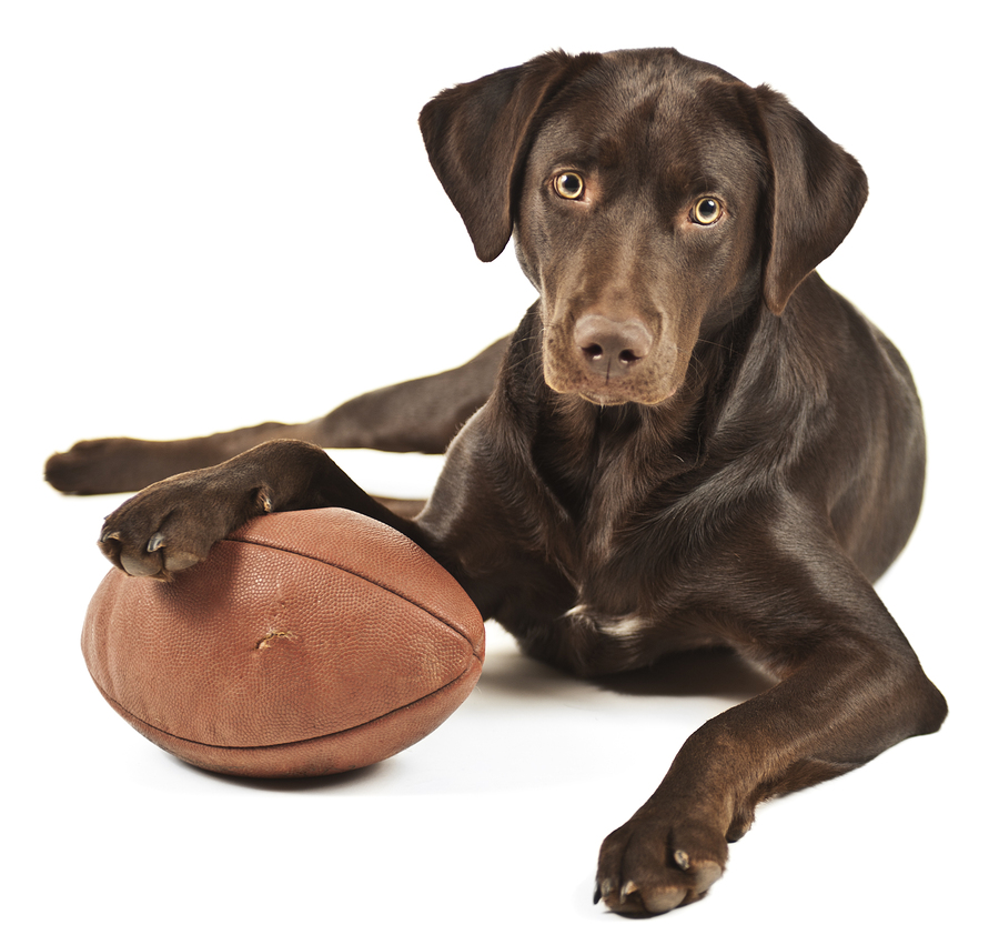 AFL Grand Final Fun With Your Pets! | AFL | Grand Final | Jetpets | Importing Dogs to Accommodation