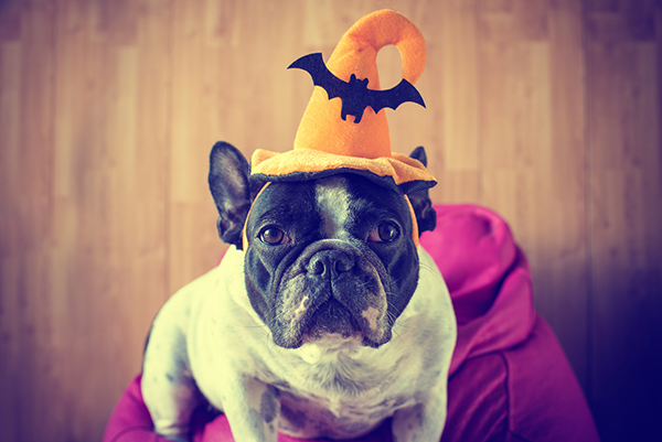 Halloween and Your Pets | Pet Costume | Jetpets | Halloween | International Pet Transport