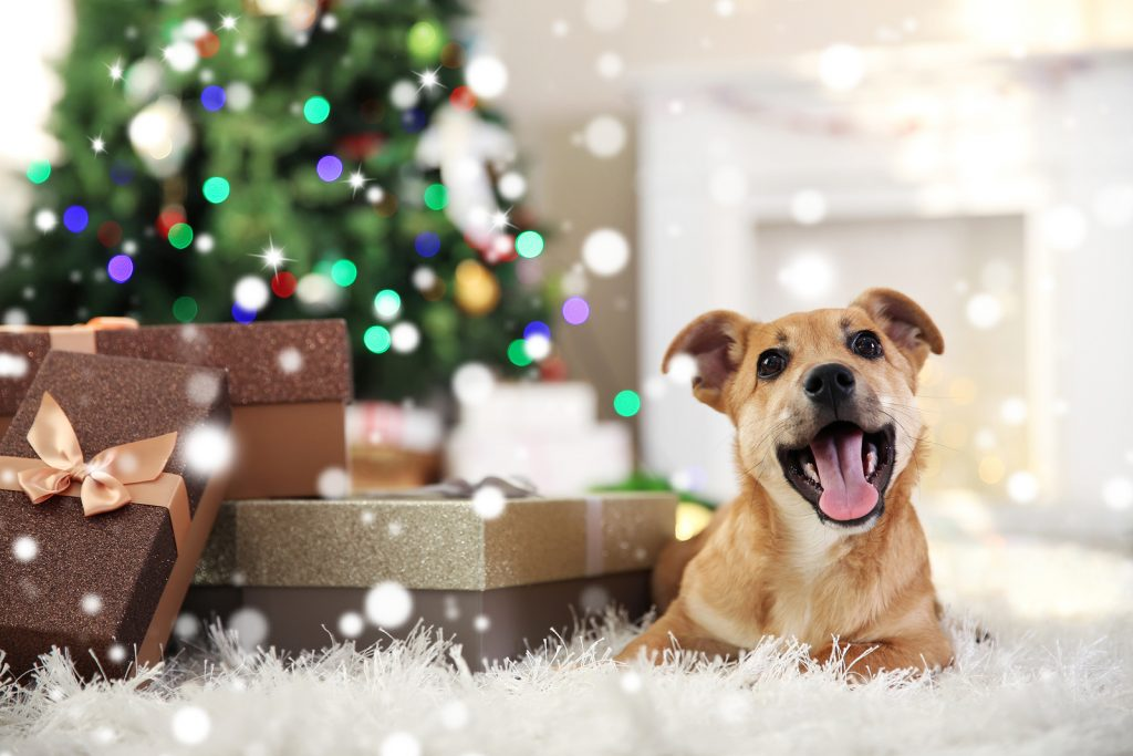 Christmas | Christmas Lights | Silly Season | Pet Tips | Jetpets