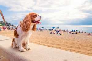 Pet Travel | International Pet Carrier | Jetpets | Holiday Checklist