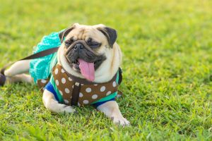 Melbourne Parks | Jetpets | Dog Transport | Dog Walking Parks