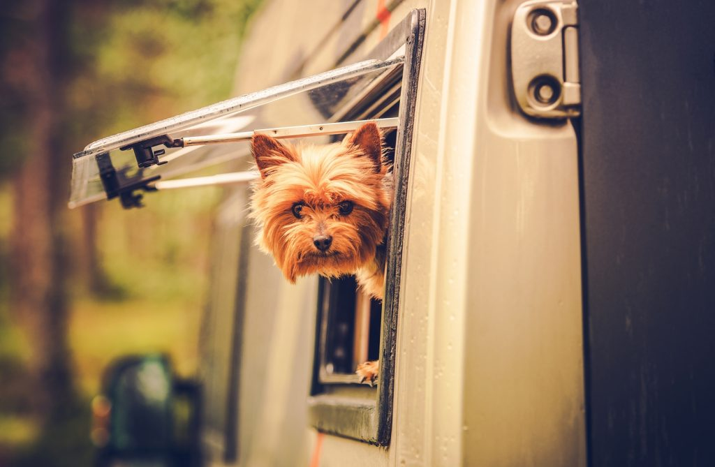 Including your pets in your summer holiday plans | Summer Plans | Jetpets | Pet Accommodation | Importing Pets to Australia