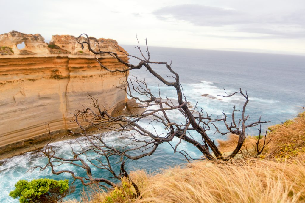 Great Ocean Road, Australia. View Overlooking The Pacific Ocean. | Great Ocean Road | Jetpets | Pet Transportation