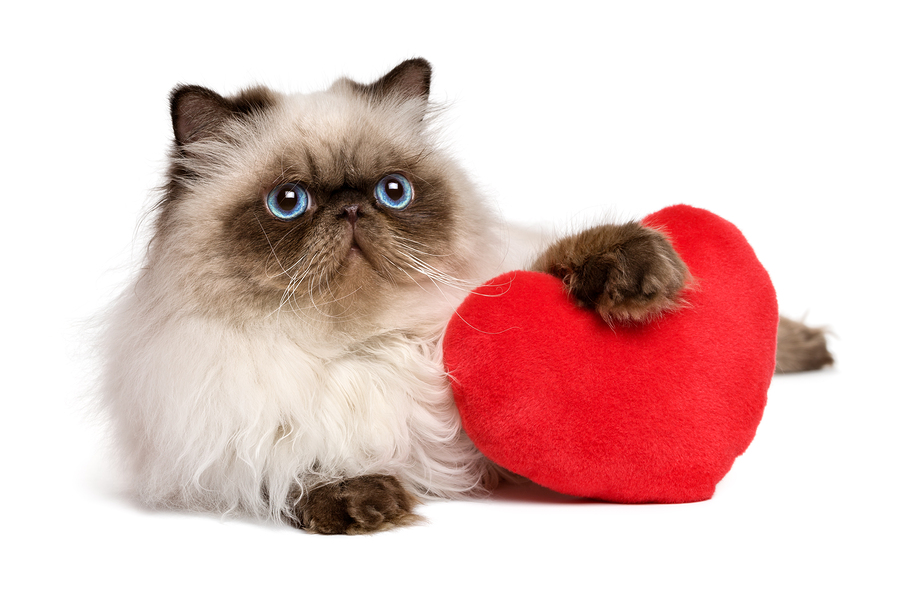 How to Get Your Pet Involved in Valentine's Day | Valentine's Day | Jetpets | Cat | Pet Transport QLD