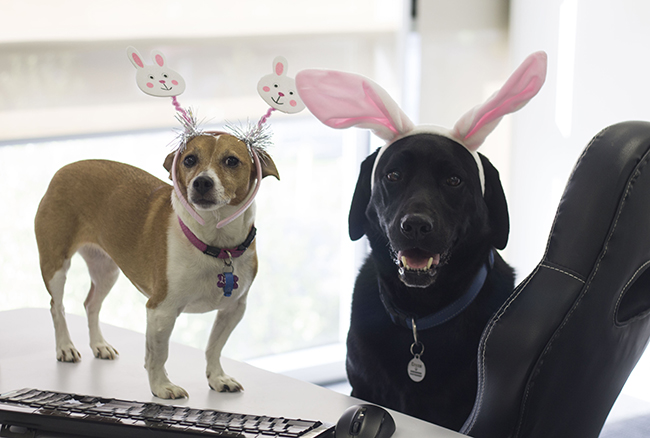 Easter Fun | Easter | Pets | Helpful Hints | Jetpets