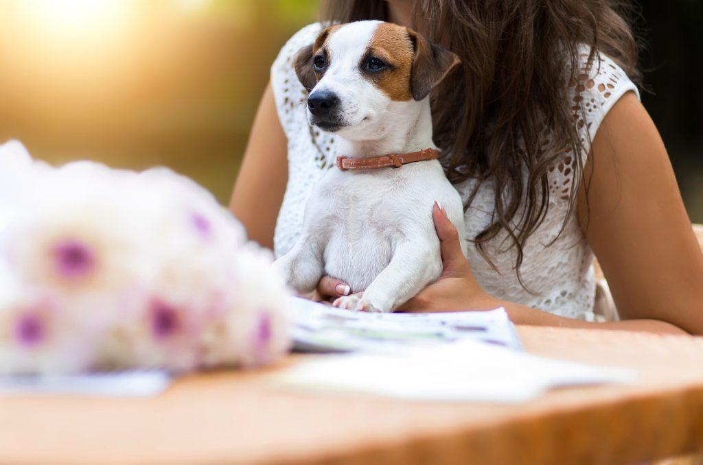 Puppicino | Puppy Transport | Melbourne Cafes | Melbourne| Jetpets