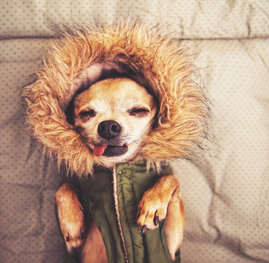 Cool weather tips | Jetpets | Keeping Pets Happy | Pet Imports