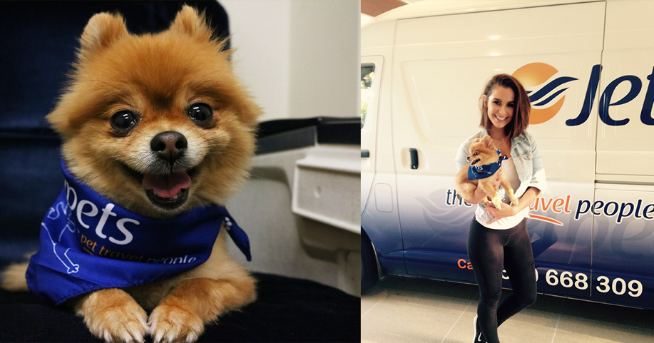Celebrity Moves | Jetpets | International Pet Transport