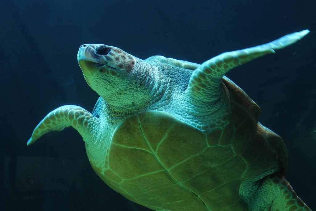 Jetpets assists in Olive Ridley Sea Turtle rehabilitation program