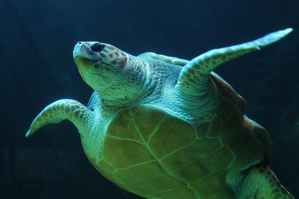 Jetpets assists in Olive Ridley Sea Turtle rehabilitation program