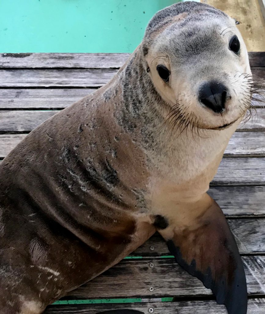 Sea Lion | Seaworld | Jetpets | Zoo Moves | Safe Pet Transport | International Pet Carrier