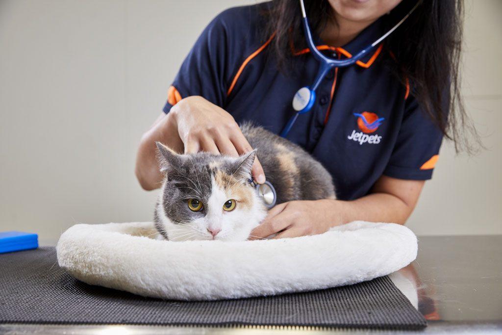 cat having a checkup