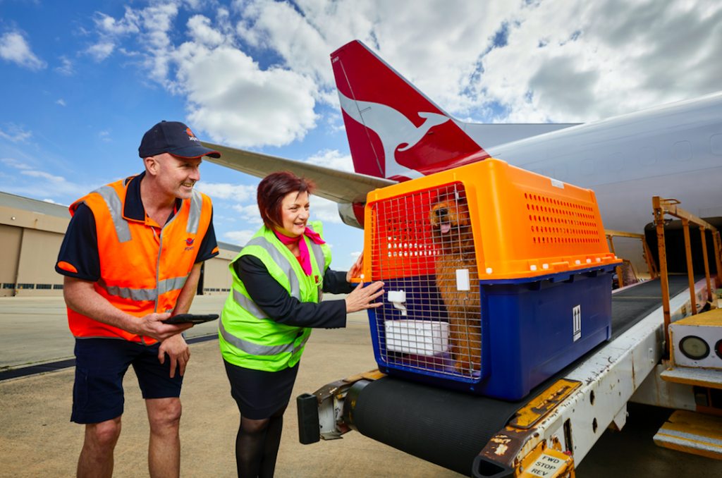 Behind the Scenes | Pet travel | Airport Process | How to Transport Dogs Internationally | Pet Movers | International Pet Transport