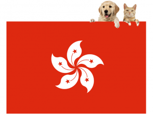 International Pet Transport to Hong Kong