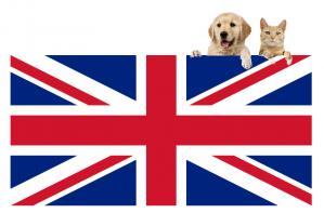 International Pet Transport to England