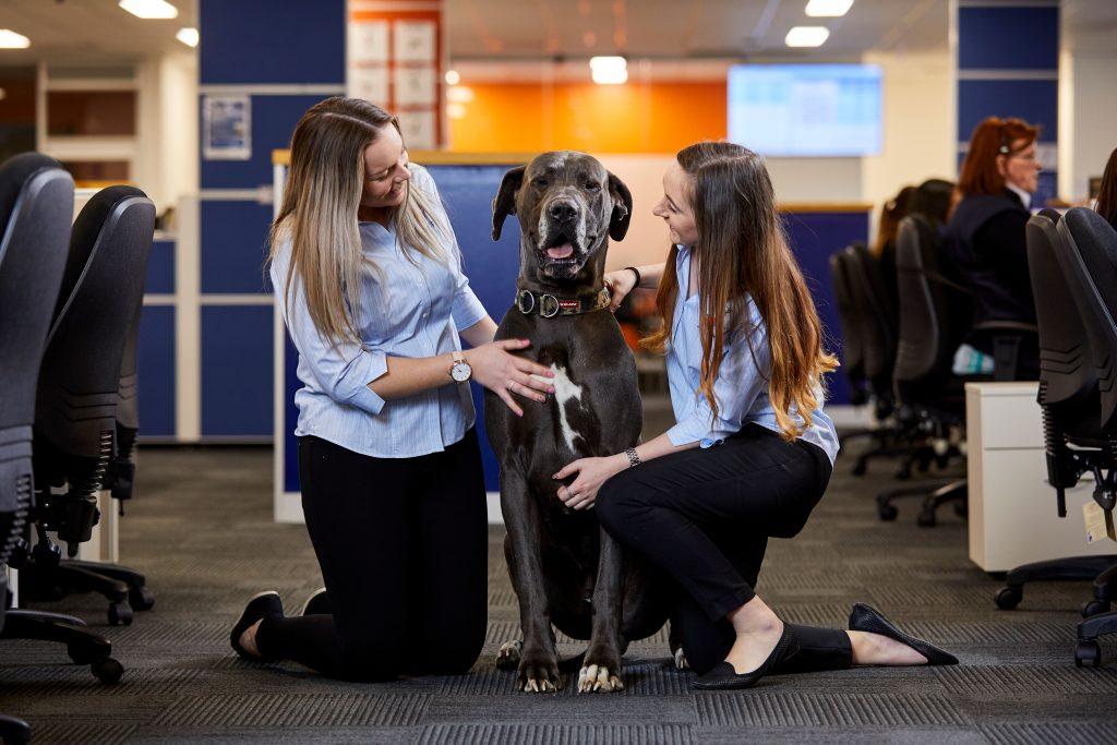 dog-friendly office jetpets