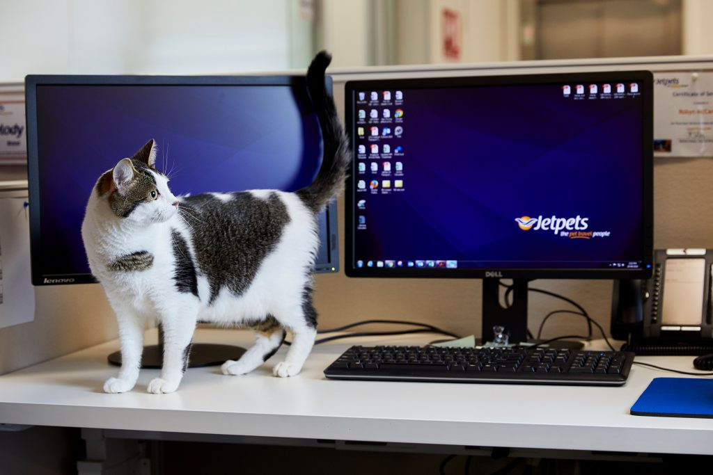 cat-friendly workplace