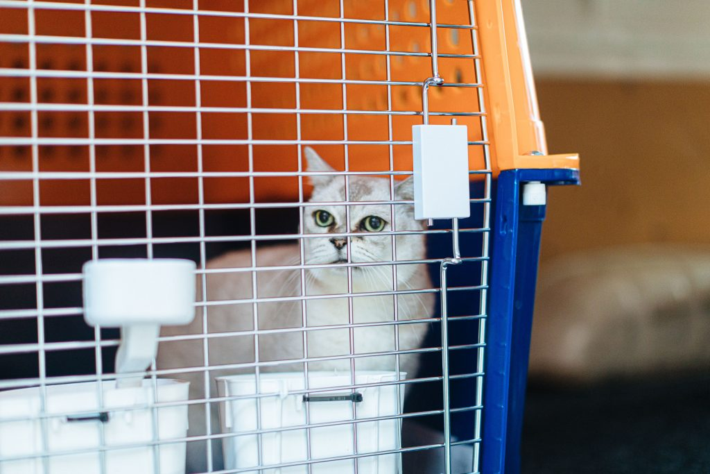 coco in PP60C cat crate