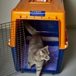 pp60c cat travel crate