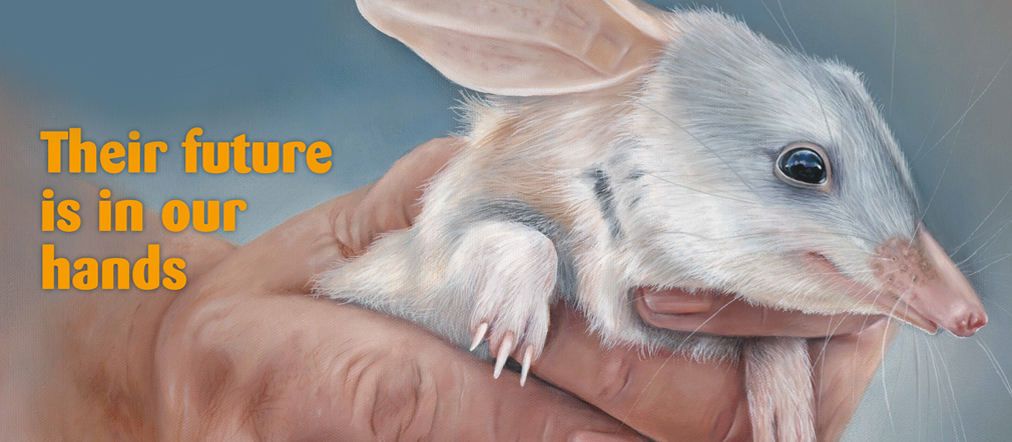 help save the bilbies