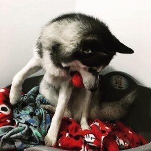 logan pet update