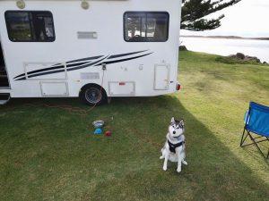 logan with campervan