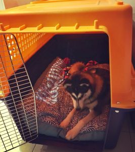 logan in jetpets travel crate