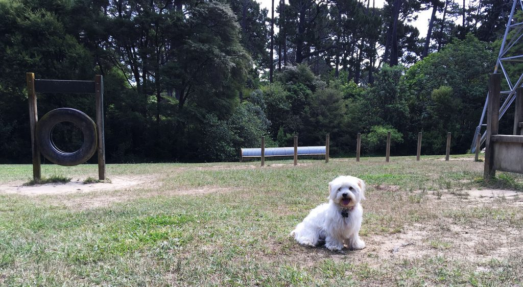 dog friendly craigavon park auckland