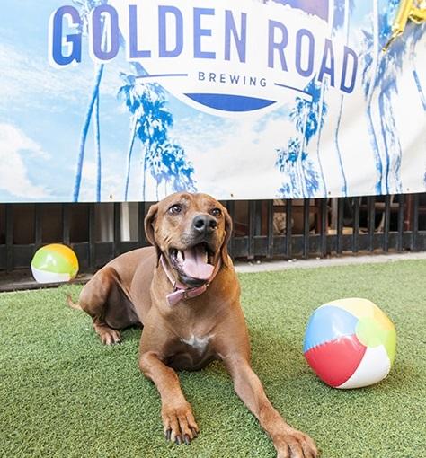 golden road brewing dog friendly brewery la