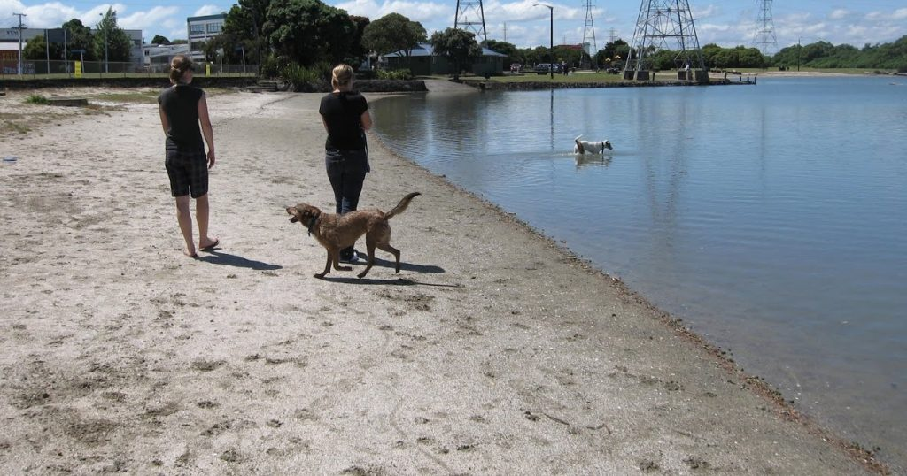 onehunga bay reserve dog friendly auckland